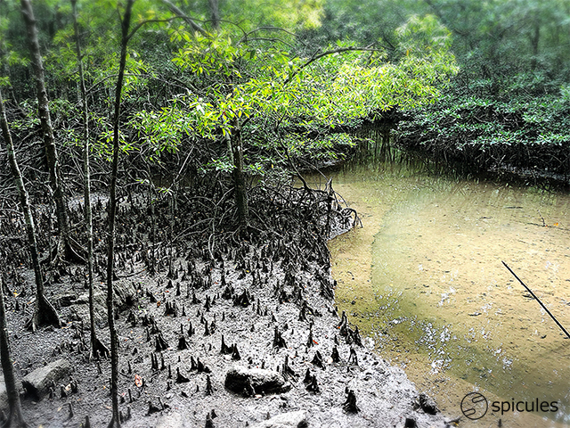 mangrove-river-safari